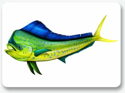 How to decorate your boat with modern boat graphics for Dolphin fish pictures